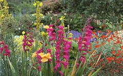 Caroline Plouff | How to grow cut flowers (carolineplouff) Tags: caroline plouff cut flowes agriculture manager grow flowers