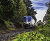 Front (Tony Tomlin) Tags: amtrak amtrakcascades railroad railway bnsf southsurrey britishcolumbia crescentbeach bc canada npu ge amtrakgenesis locomotive diesel diesellocomotives