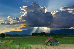 Creative nature (chonpinta) Tags: background beautiful colorful cornfield countryside farm fresh nature outside season summer yellow green golden land landscape blue bluesky happy tourist travel thailand north top10 impress flickr photography mountain wow outdoor