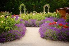 PLW_5611 (Laszlo Perger) Tags: wien vienna sterreich austria blumengarten hirschstetten flowergarden