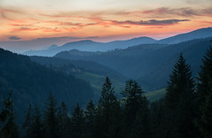 Evening haze (Milos Golubovic) Tags: zlatar srbija serbia evening sunset cold summer forest pinetrees d7100 haze sigma nikon ngc novavaros zlatibor