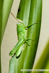 20121026-112 (ajakblackgoat) Tags: macro insect nikonmicro105mmf28 nikond700