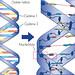 La Fábrica de la Ciencia. Programa 034. Entrevista a Dr. en bioquímica José Antonio Garrido. ADN, Biotécnología, Genoma