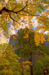 Fall at Yosemite National Park - CA 2011 (www.35mmNegative.com(On a Break, Catchin) Tags: bear park snow storm fall ice colors river photography waterfall nikon view wildlife postcard meadow tunnel deer national valley yosemite cooks dogwoods hazarika merceed www35mmnegativecom reetom