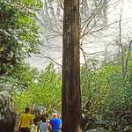 1983_JULY_Yosemite2-FujiRD100-RollB_0003 thumbnail
