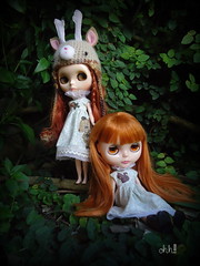 let´s play in the forest again