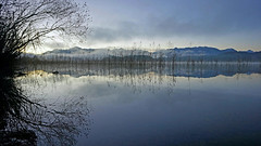 Morgendmmerung am Staffelsee (dorena-wm) Tags: november cloud mist mountain lake alps reflection tree reed water berg fog bayern bavaria dawn see bush wasser nebel wolke dmmerung alpen blau morgen spiegelung baum busch daybreak schilf 2012 reflektion morgendmmerung staffelsee blauesland bestcapturesaoi elitegalleryaoi dorenawm