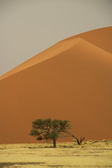 Namib Desert, Namibia (michaelbaynes87) Tags: africa trip travel red vacation orange tree nature canon amazing sand desert dune namibia sanddunes namib travelphotography dune45 blinkagain