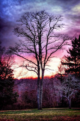 Burning Daylight (NYRBlue94) Tags: park county pink blue autumn trees sunset red sky orange newyork color tree fall leaves forest catchycolors walking suffolk woods october purple hiking walk peak hike longisland foliage trail the4elements