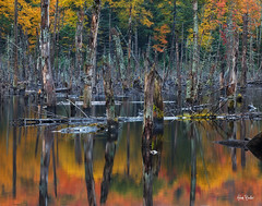 autumn palette ([Adam Baker]) Tags: statepark autumn trees ny reflection forest canon hiking logs swamp adirondack adambaker 70200mm28l 5dmkii