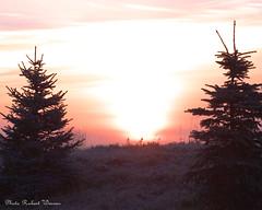 Un beau matin...en novembre / A nice november morning... (Pentax_clic) Tags: morning november autumn sun automne soleil novembre pentax quebec fir sapin matin kx vaudreuil