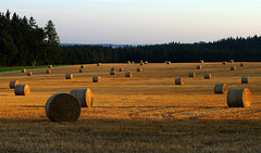 August ends (Gregor  Samsa) Tags: autumn light sunset shadow summer fall field evening highlands shadows czech illumination straw august shades czechrepublic late bales bale bohemia vysoina esko eskrepublika vysocina vrchovina ceskomoravska czechmoravian eskomoravskvrchovina ceskomoravskavrchovina czechmoravianhighlands