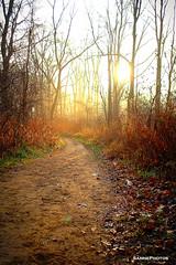 Golden Path (SannePhotos (S. Douthitt)) Tags: morning trees light sun forest woods path indiana trail rise chesterton coffeecreek watershedpreserve sarahdouthitt sannephotos