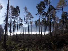 Maienfeld (Alberto Cameroni) Tags: svizzera meienfeld mattino mattina bosco nebbia montagne cielo azzurro leica dlux4 controluce alberi foresta cechov ziovanja letteratura teatro cantongrigioni