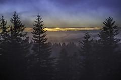 Les cimes du Jura au petit matin 06 (Patrick d'Alsace) Tags: france soleil patrick jura lumiere paysage arbre brouillard fort brume leverdesoleil zaugg patrickzaugg