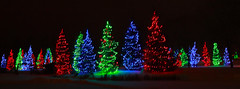 Christmas Trees (LostMyHeadache: Absolutely Free *) Tags: christmas trees winter snow cold night canon festive fun lights evening holidays bright christmaslights christmastrees happyholidays merrychristmas sprucemeadows davidsmith calgaryalbertacanada eos60d