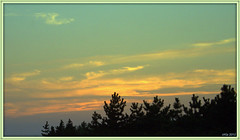 Green Sunset (Irina Kiseleva) Tags: blue sunset sky orange cloud ny black tree nature water colors silhouette composition turquoise farrockaway mygearandme mygearandmepremium mygearandmebronze mygearandmesilver ringexcellence