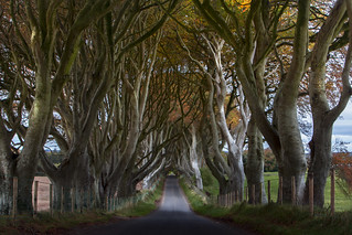 Wishing For - Dark Hedges, Ballymoney,  Northern Ireland