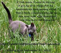 If I had known.. (Jamie's Team) Tags: cat lost lostcat helpfindjamie