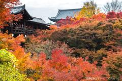 Red Tofukuji / Kyoto, Japan (yameme) Tags: travel japan canon eos maple kyoto tofukuji   kansai     24105mmlis 5d3 5dmarkiii