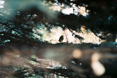 . (anna nycz) Tags: bird film robin analog 35mm gawlak