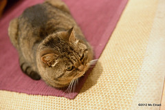 DSC_2043 (mnadi) Tags: wild cats cute beautiful cat tabby stockphotos millie gettyimages stockphoto stockimage