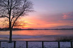 ducks on ice (emma2thomas) Tags: sunset lake thenetherlands ducks friesland fryslan winterlandscape nannewiid imagepoetry ducksonice emmathomas
