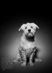 2 Photos (Charlie the Cheeky Monkey) Tags: dog puppy mutt jackson ratterrier thehoove fresnelhooverandjackson fresnelphotography