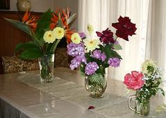 Ms flores (leograttoni) Tags: flowers stilllife flores garden table buenosaires harvest diningroom bodegn cosecha mesa jardn laplata comedor naturalezamuerta