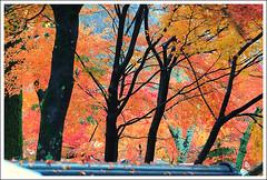 20121126_6811a_京都之秋 (Redhat/小紅帽) Tags: autumn fall japan temple maple kyoto redhat 京都 夕陽 日本 紅葉 秋 夕日 楓葉 あき 秋天 楓紅 eikando もみじ 小紅帽 永觀堂 秋雨 えいかんどう