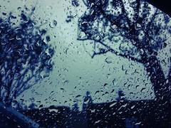 I don't mind the rain, really. (JuanRoman) Tags: raindrops chameleon