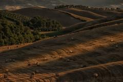 Panorami  Tosacani... (gionatatammaro) Tags: colline tramonto alberi trees toscany italia sunset giochidiluce nikon hills villamagna