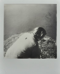 """All of the times we put calamine lotion on our faces to make us look like beauty queens."" (H o l l y.) Tags: impossible project polaroid analog instant photo bw black white no color girl portrait water pond fashion retro indie vintage"