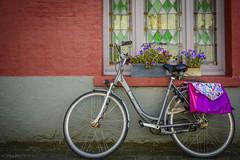 La dama de las violetas (Mauro Esains) Tags: brujas brugge blgica bicicleta bikes ventana pared ladrillos paseo flores violetas alforjas vitrauxs antiguo maceta mujer seora