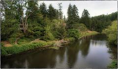 Up the River (NoJuan) Tags: sammamishriver river a7 sonya7 sonya7withmanualfocuslens nikkor nikkorlens nikkorlensonsonya7 20mmnikkor