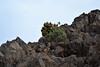 plants at summit (heartinhawaii) Tags: maui haleakala rocks lavarocks upcountry summit volcanosummit haleakalasummit 10023feet 10023elevation mauivolcano hawaii mauiinnovember nikond3300 rocky plants