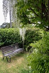Damp and Cold (Jocey K) Tags: christchurch newzealand november flowers wisteria sky bench