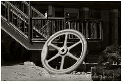 The Guard. (Louis Shum) Tags: blackandwhite louisshum vancouver bc wheel oldwheel bird pigeon round sunny sun ladder tonal zonesystem fineart artistic