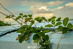 En el Muro (TheMagicLensPhotography) Tags: beach nature sea sunset