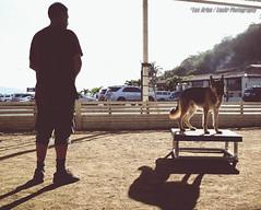 Hombre y Perro (Lex Arias / LeoAr Photography) Tags: 2016 agiliy animales animals artistic backlight barquisimeto contraluz dog dogagility familia family hombre iglexariasphotos leoarphotography lexarias luzsolar man mascota nikon nikond3100 perro silhouette silueta sport venezuela vintage