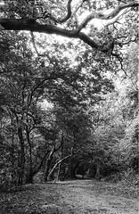 Photo Walk 18/08/16 (chrishoodphoto) Tags: ilford hp5 bw canon eos 30 35mm f2 50mm f18 high contrast nikon coolscan iv ed vuescan lightroom adobe