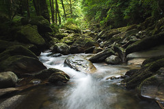 Fresh Creek (Vilmos Folk) Tags: beauty nature day environment flowing water forest green color lush foliage moss motion non urban scene nonurban outdoors river rock object scenics stone stream tranquil tranquility tree woodland landscape creek waterfall serene outdoor