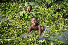 Cooling down (haqiqimeraat) Tags: kids children swim cooling swamp child chittagong bangladesh streetphotography nikon 50 50mmf18 prime village rural