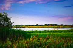 Evening on the Nature Reserve (C.G.Photos) Tags: norfolkbroads landscapes marshes eastanglia england norfolk
