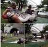 آیا تا کنون ماهی ۲ متری  دیده اید! (وبگردی) Tags: فرانسه ماهی ماهی2متری ماهیبزرگ