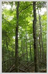 Ferd's Bog Trail in Eagle Bay, NY (JuneNY) Tags: ferdsbog eaglebayny pigeonlakewildernessarea adirondacks