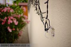 PLW_5538 (Laszlo Perger) Tags: wien vienna sterreich austria blumengarten hirschstetten flowergarden