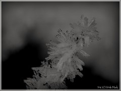 Crystals  (frdmk) Tags: crystal snow ice blackandwhite art cold