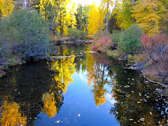 Upper Truckee Fall (jcookfisher) Tags: california county red orange lake color colour yellow forest river october tahoe el basin upper management national catchy photostream dorado unit truckee