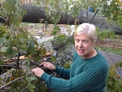 Sue och hennes träd Photo